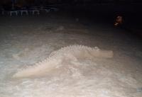 Za menej - Nílsky krokodíl?