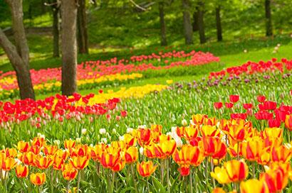 holandsko vystava kvetov
