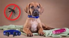 Zľava 47%: Netoxický, antiparazitný obojok pre psy a mačky len za 7,90 €. Ochráňte svojho domáceho maznáčika pred blchami, kliešťami a roztočmi špeciálnym obojkom s účinkom až 4 mesiace!