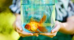 Zľava 53%: Čistenie akvária už nebude nikdy pre vás starosť. Samočistiace akvárium My Fun Fish len za 8,50 € sa čistí rýchlo a takmer bez námahy. Urobte radosť ako svojim deťom, tak aj rybičkám!